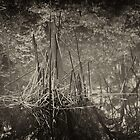 Reeds & Reflections by Geoff Smith