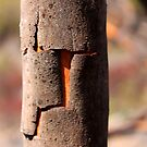 bandage bark by Tim Horton