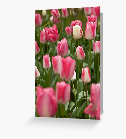 Tulips ........ Greeting Card
