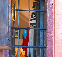 Window of Oia by Barbara  Brown