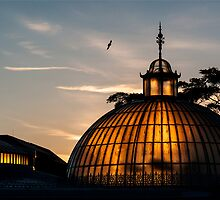 Botanical Gardens 1-Glasgow by maxblack
