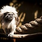 You Hairy Marmoset by Daniel Rankmore