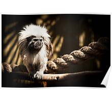 You Hairy Marmoset Poster