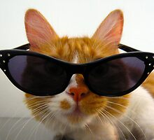 Cool Cat Wearing Sunglasses by MoMoCards