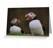 Puffins Chatting Greeting Card