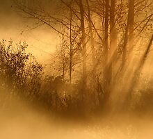 4.10.2013: October Morning II by Petri Volanen