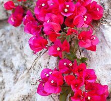 Amalfi Red by Adrian Alford Photography