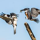 Sibling rivalry by jamesmcdonald