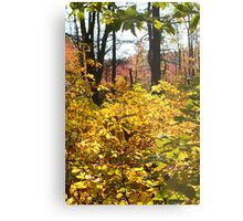Noanet Woodlands Fall Foliage Metal Print