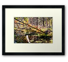 Fall Foliage Over A Pond Framed Print