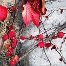 Fall on the wall by Arie Koene
