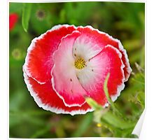 Decorative Poppy Poster