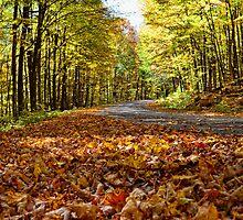 Autumn in low profile... by marchello