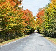 Season of colours by marchello