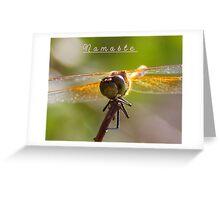 Namaste` Greeting Card