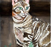 Sokoke Forest Cat Portrait by Oldetimemercan