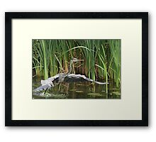 Water racing Framed Print