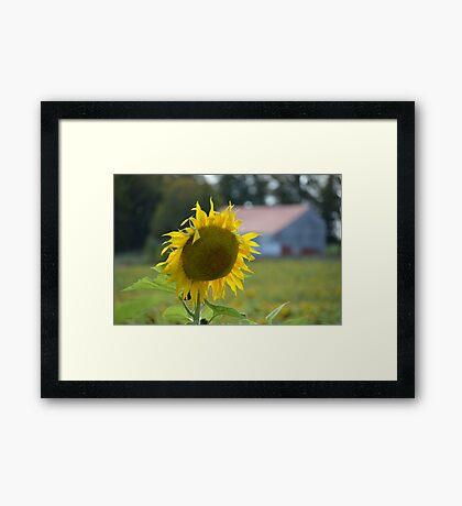As bright as the sun Framed Print
