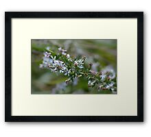 Blossoms in fall Framed Print