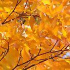 Golden Orange Autumn Leaves Tree Art Prints by BasleeArtPrints