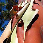 Peeling Arbutus Bark by Brian Chase