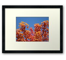 Blue Sky Sunny Red Orange Autumn Leaves art prints Framed Print