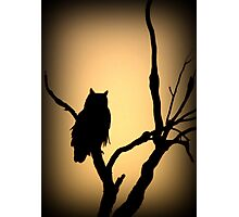 Great Horned Owl~ Sunset Stare Photographic Print