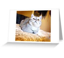 Eggs Squint Greeting Card