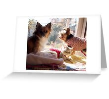 Chillin in the Sunshine with mah Dawgs Greeting Card
