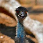 Emu 2 by Bami
