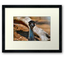 Emu 2 Framed Print