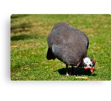 Guinea Fowl 2 Canvas Print