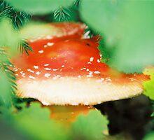 Amanita muscaria I. by Zuzana Vajdova