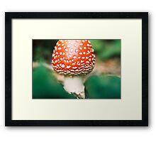 Amanita muscaria II. Framed Print