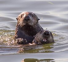 Sea otters of California by Anthony Brewer