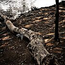 Log of Deadwood by EdwardKay