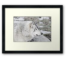 Timber Wolf Profile Framed Print