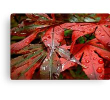 Touch Me In The Rain Canvas Print