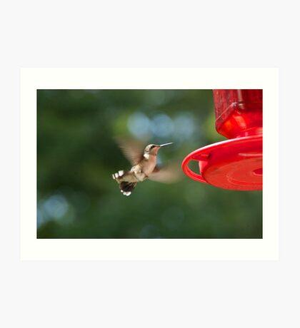 "My guard ""dog"" Rufus. A hummingbird. Art Print"