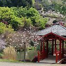 Japanese garden - at Burnie rhodo garden    by gaylene