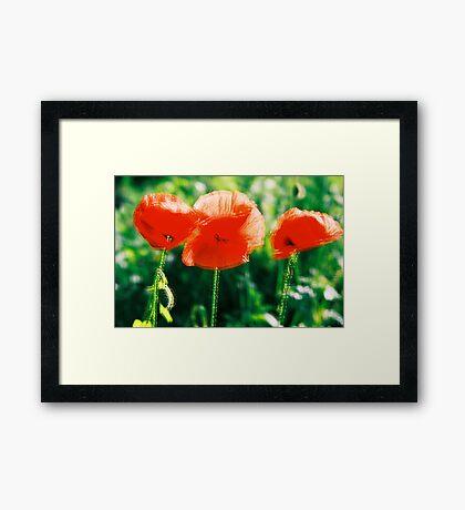 Poppy I. Framed Print