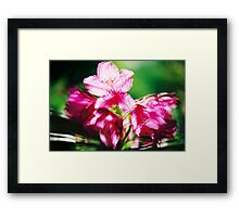 Rhododendron II. Framed Print