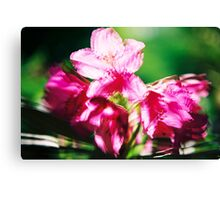 Rhododendron II. Canvas Print