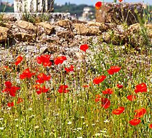 Poppies In The Forum by Adrian Alford Photography