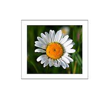 Flower by AhaC