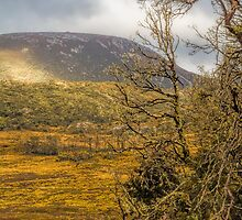 Autumn in Cradle Mountain, Tasmania #2 by Elaine Teague