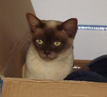 Cat in a box by DonningtonCat