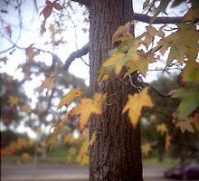 Autumn by jacquelinekvz