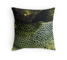 Daymaniyat Islands, Oman (Spotted Moray Eel) Throw Pillow