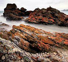 Tasmania Green Point by Angelika  Vogel